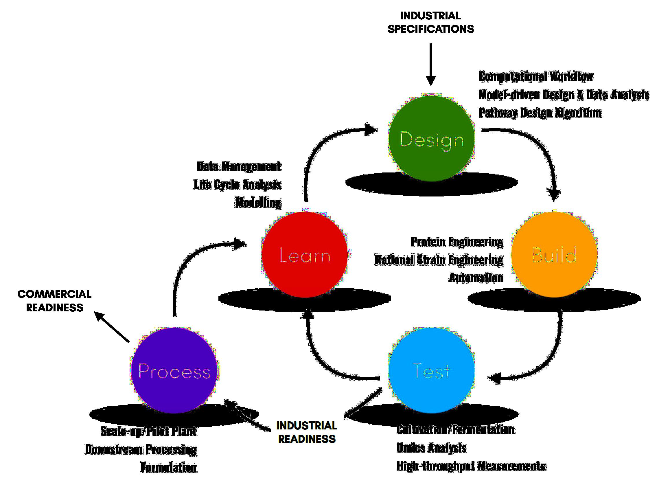 DBTL-P cycle Transparent